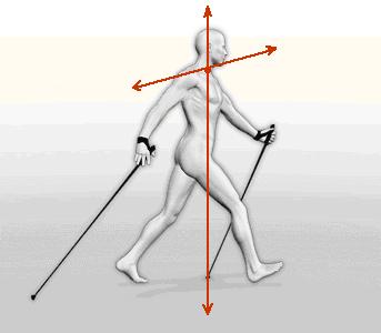 METODO NORDIC WALKING – ALFA 247